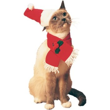 We couldnt find a picture of Kristine Jares of Cats on Holiday. So enjoy this pic of a holiday cat