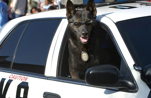Dont let the sunglasses fool you, police dogs are not cool.