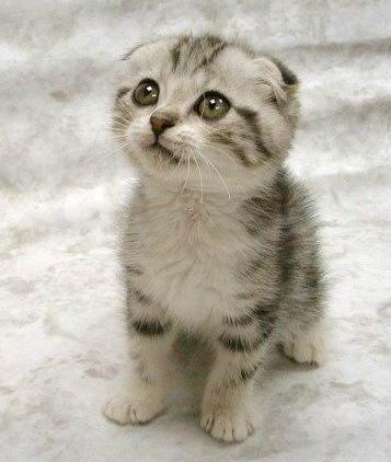 This weeks concert announcements are so sucky, were showing you this cute kitty to make up for them