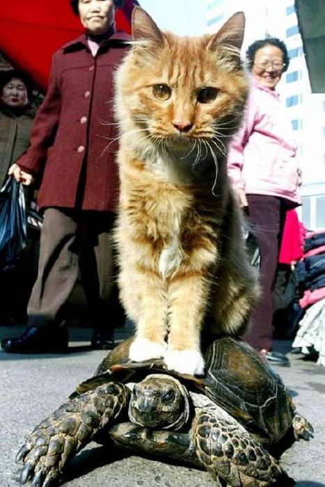 Were not too excited about any of these new shows. So enjoy a picture of a cat riding a turtle instead
