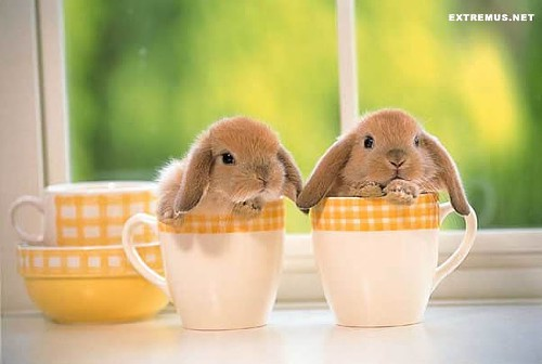 PETA does not recommend storing your bunnies in coffee mugs.