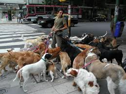 If only hed had this many dogs the cops wouldnt have bothered him.