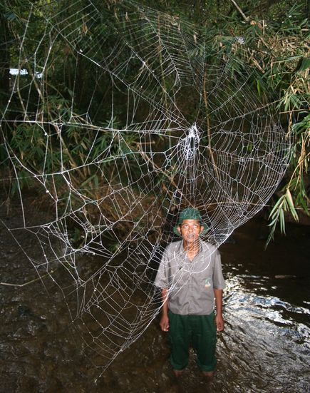 Pic of the Day: World's Largest Spider Webs | Scene and ...