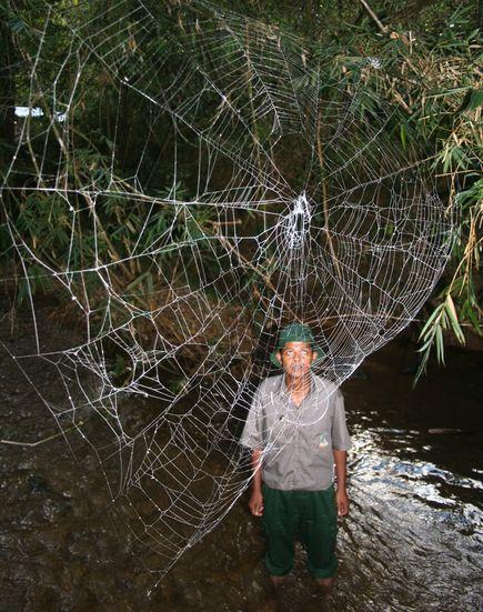 big-freaking-spider-web.jpg