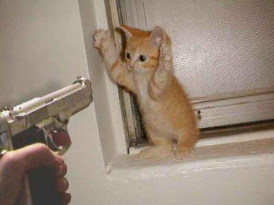 cat-dont-shoot.jpg