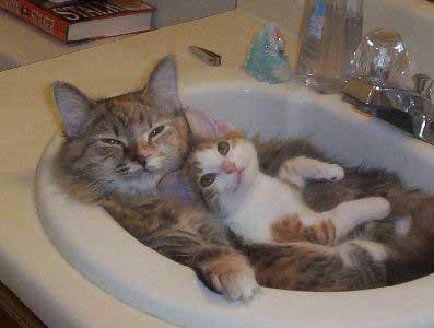 No one wants to see an old man masturbating in his driveway, so here are two cute cats in a sink.